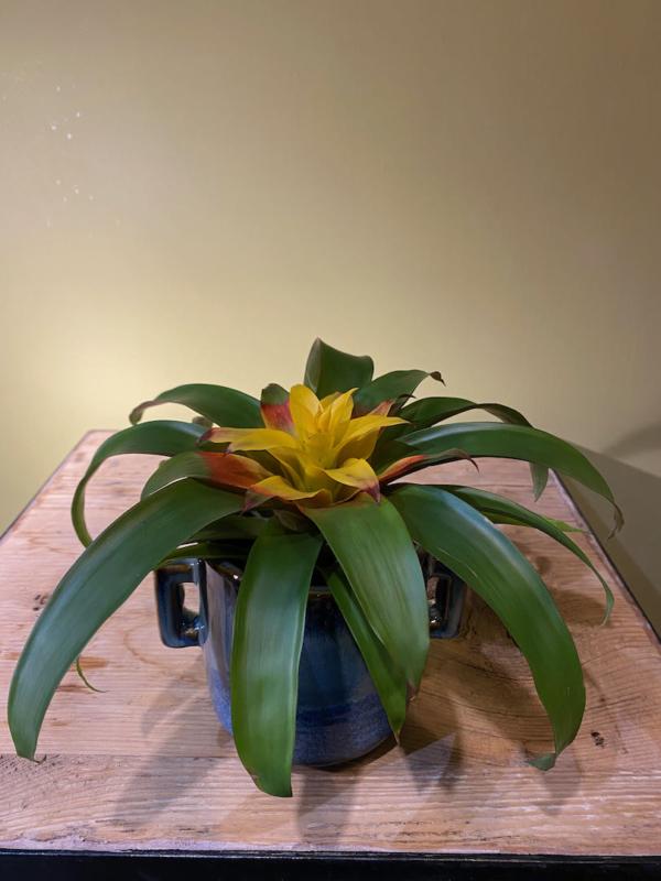 vaso-piccolo-vasetto-tazza-ceramica-laccato-vintage-pianta-bromelia-rossa-gialla-girafiore